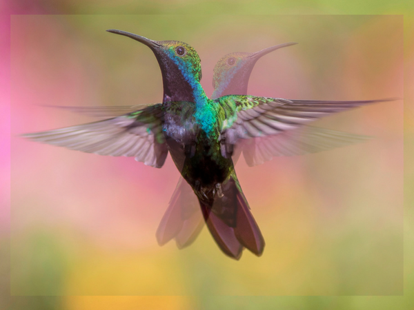 The girl who became a hummingbird (poem)